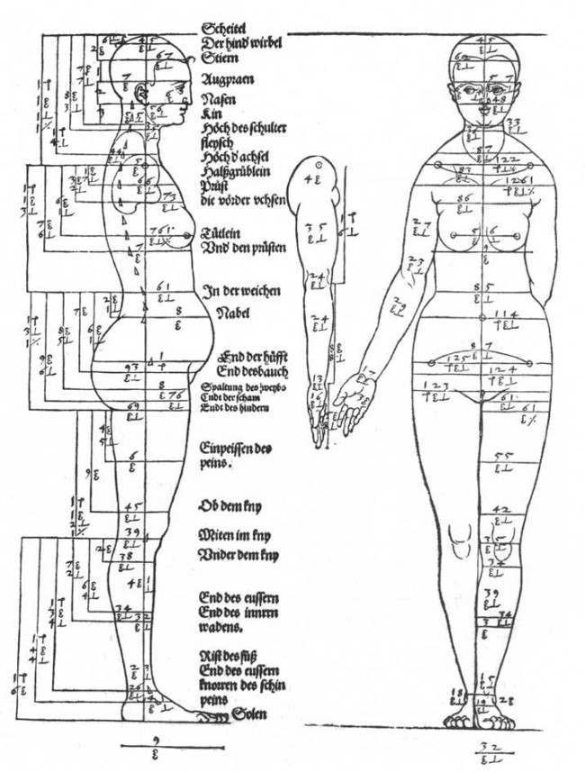 Albrecht Dürer body Albrecht Dürer and 20th and 21st Century studies on the proportions of the human body
