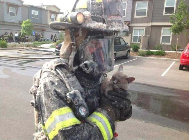 Firefighter cat save
