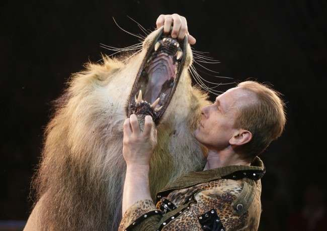 PA 16526309 In pictures: Oleksiy Pinko sticks his head in a lions mouth