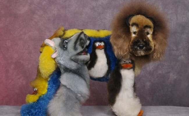 dog grooming 7