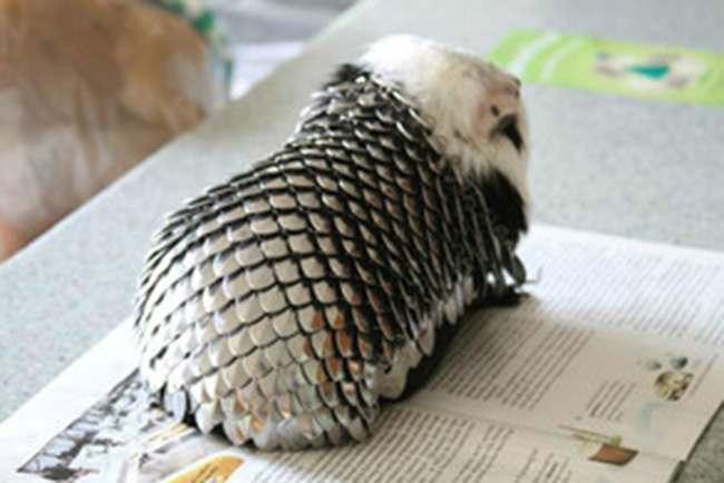 game of thrones guinea pigs 23