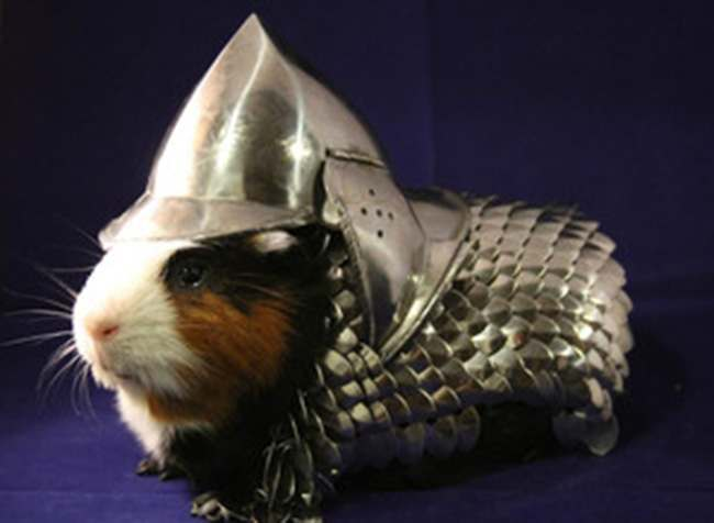 game of thrones guinea pigs For sale: This Game of Thrones suit of armour for your guinea pig