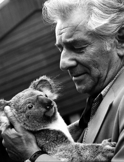 Leonard Bernstein and a quiet Koala