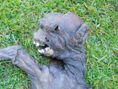 Plettenberg Bay alien creature