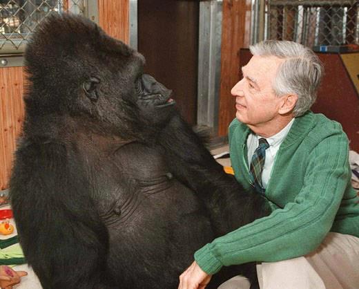 Rogers ape