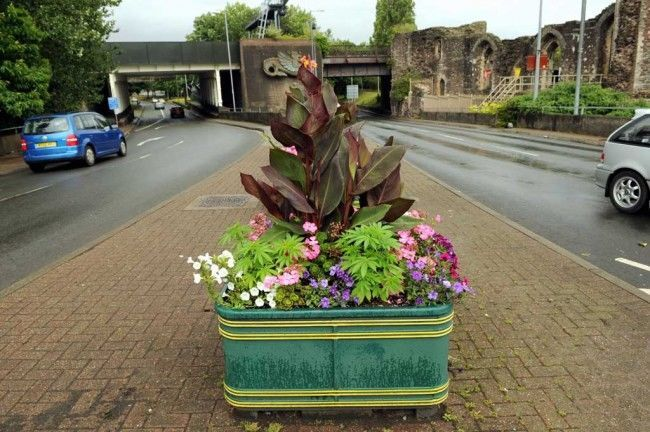 Pot plants Newport council gives away free cannabis in plant pots