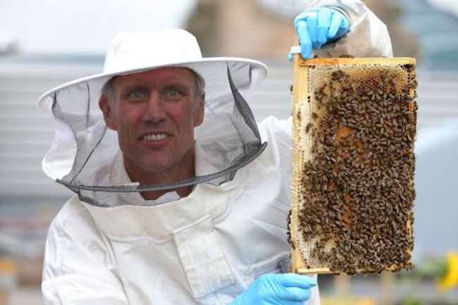 Mark Berry, aka Bez, former member of Manchester band the Happy Mondays, holds a tray of honey bees during a photocall at The Printworks in Manchester city centre.