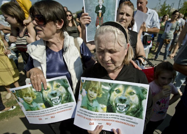 Aurica Anghel, grandmother of Ionut Anghel, a 4-year old boy who was fatally mauled by stray dogs last Monday after she failed to monitor him for a period of time while in a park, holds his picture during a protest in Bucharest, Romania, Sunday, Sept. 8, 2013. The stray dog population of the Romanian capital is around 64 thousand according to city hall sources. The Matei Bals hospital for infectious diseases says it has treated 9,760 people for dogs bites this year, of which a quarter were children. It was the death of the 4-year-old boy that sparked a new debate over killing strays.(AP Photo/Vadim Ghirda)