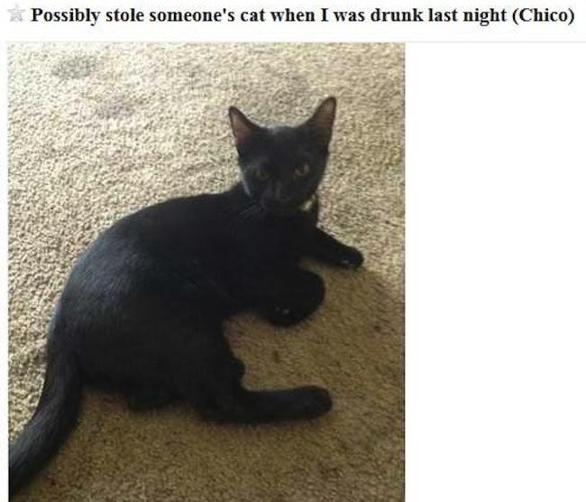 django cat stolen 1