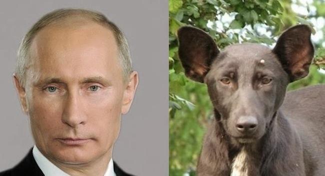 russian dog putin