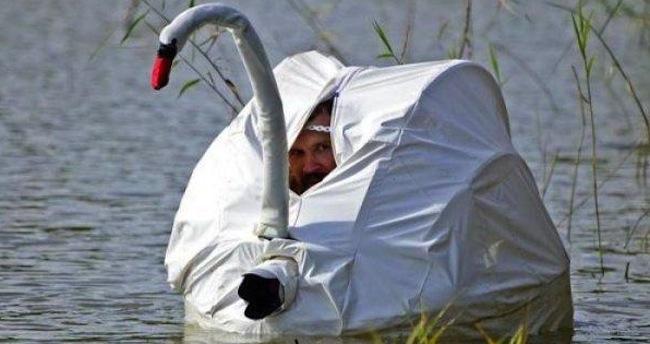 swan spy