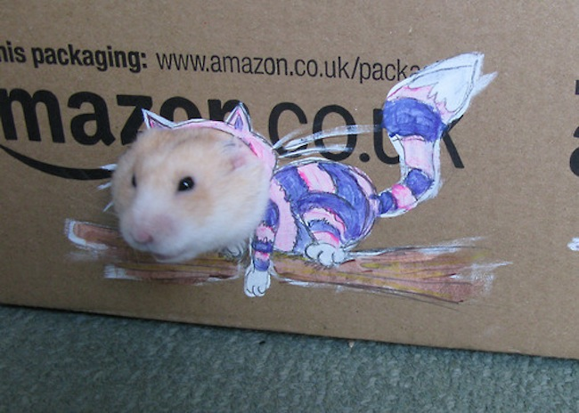 Anorak News How To Dress Your Hamster With A Cardboard