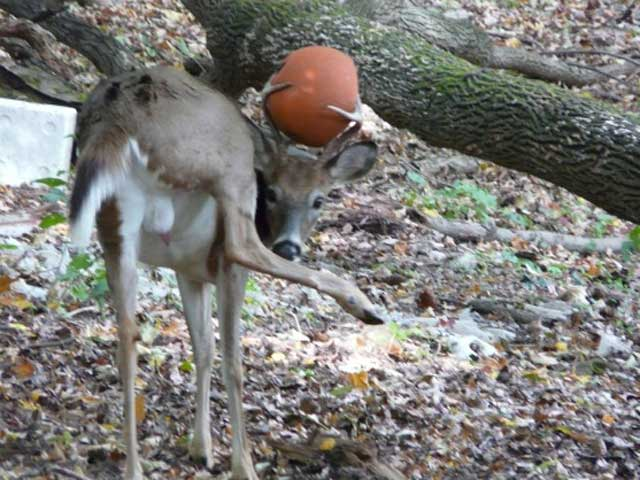 Deer-with-basketball antlers