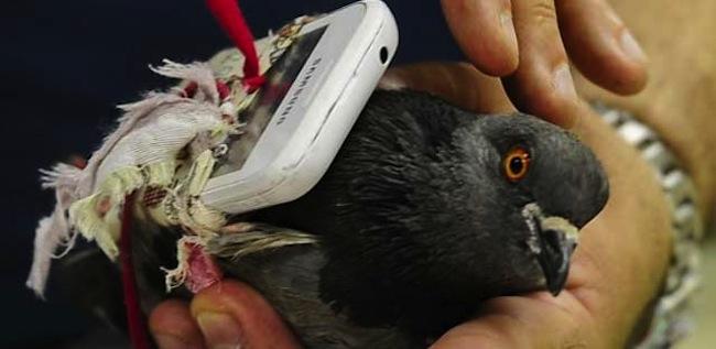 Phone pigeon