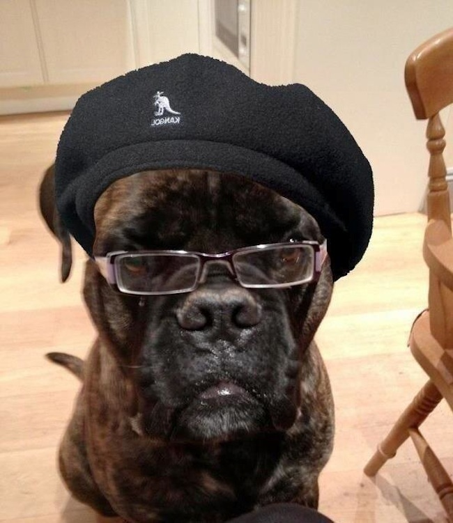 Possibly the best Samuel L. Jackson picture ever