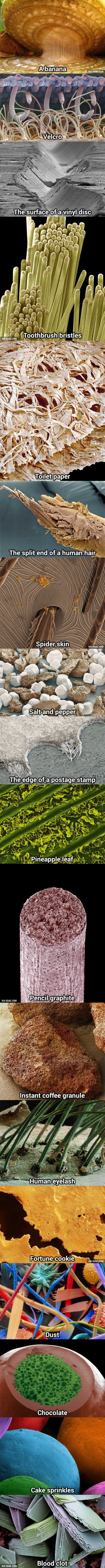 life under the microscope