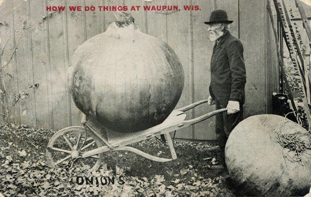 onions 3