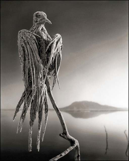 calcified animals