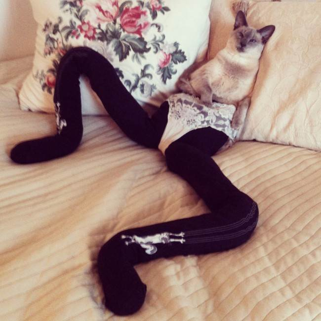 cats in tights 2