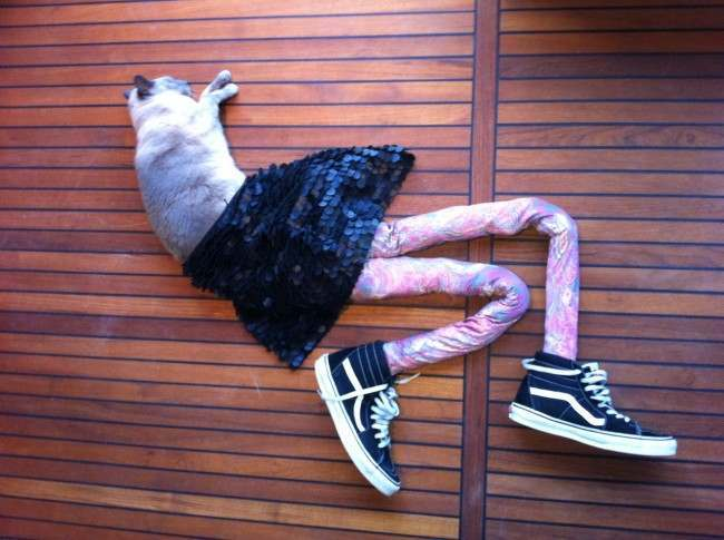 cats in tights