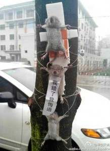 crucified rats china