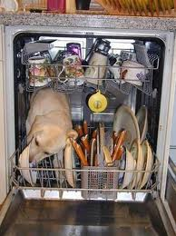 dog dishwaser