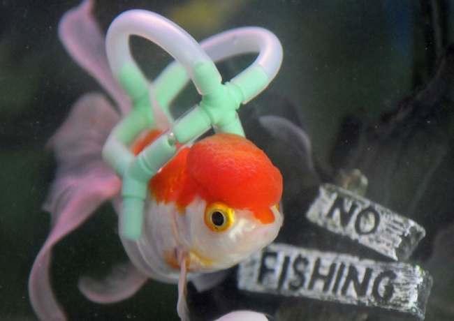 fish life vest 3