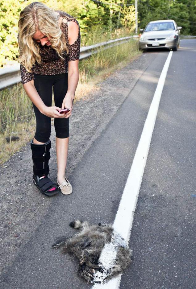 racoon dead