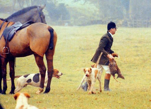 "Member of the Duke of Beaufort Hunt takes a dead fox from the hounds after a ""kill""  near Tetbury, Gloucestershire."