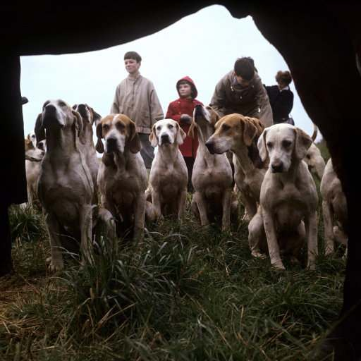 Hunting - Old Berkeley Foxhounds - Cholesbury