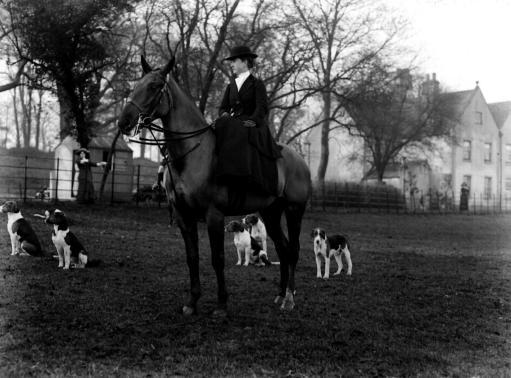 FOX HUNTING 1911: The Earl of Fitzwilliam's (Grove) pack of Hounds at Bilby. Mrs A. Harrison Smith of Carlton Hall, near Worksop, Yorkshire.