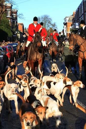 Riders and horses at the Cheshire Hunt which leaves from The Swan in Tarporley, England's oldest Hunt Club founded in 1762, as eight out of ten people believe foxhunting should remain illegal, an animal welfare charity has claimed on the biggest day in the hunting calendar.