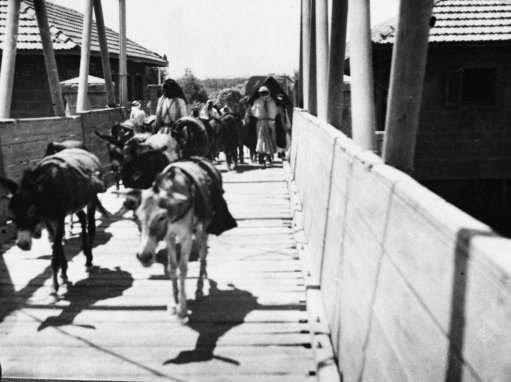 A train of donkeys crosses the Allenby Bridge, over the River Jordan on July 3, 1936, from Jordan into Palestine.