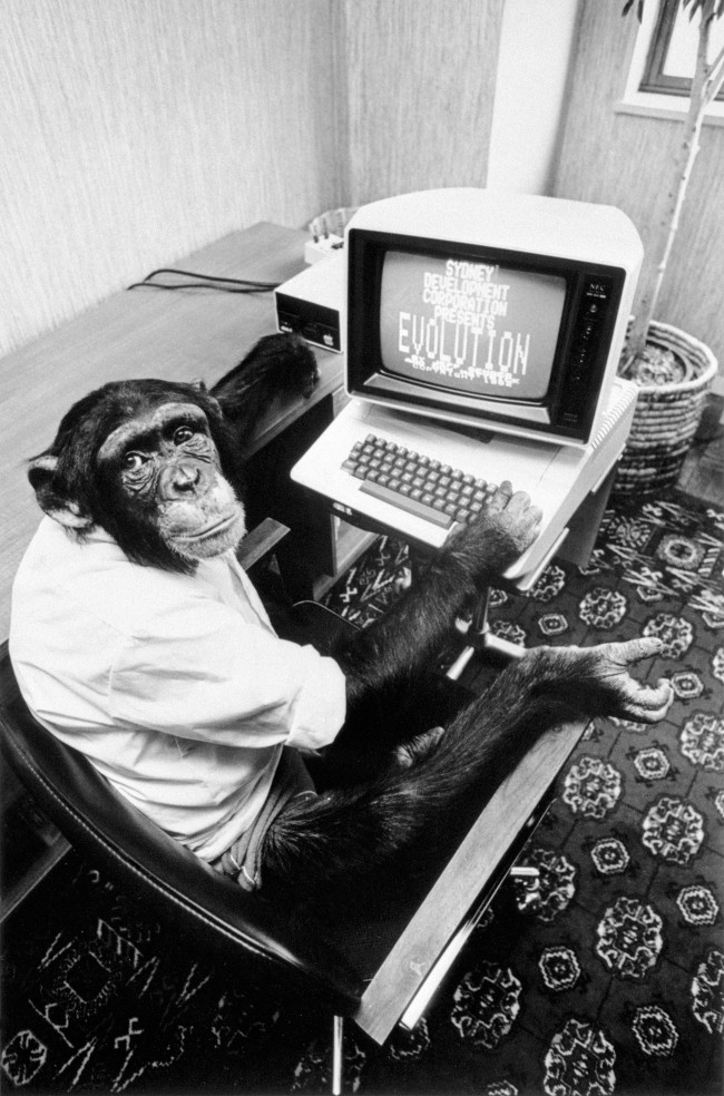 "A chimp at the controls of the latest computer game from American, ""Evolution"" Date: 17/06/1983"