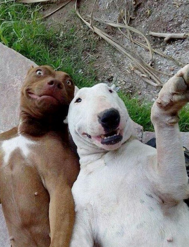 animal selfie 6