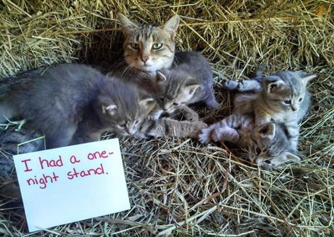 cat shaming 0