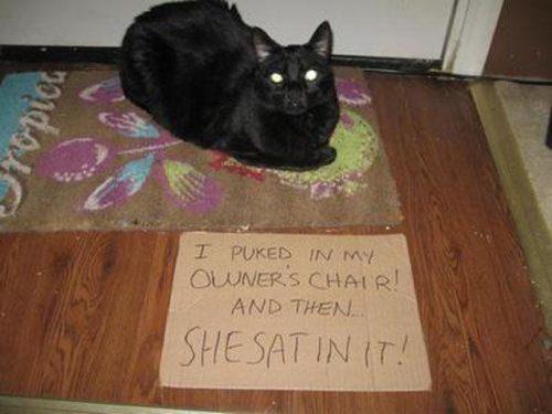 cat shaming 11