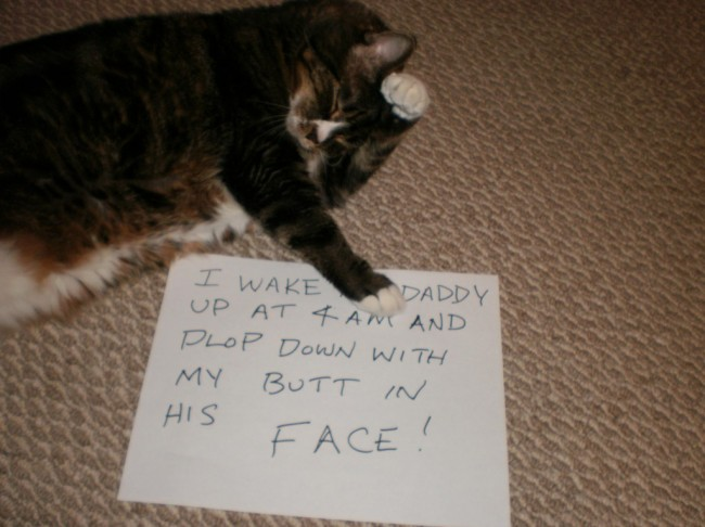 cat shaming 113