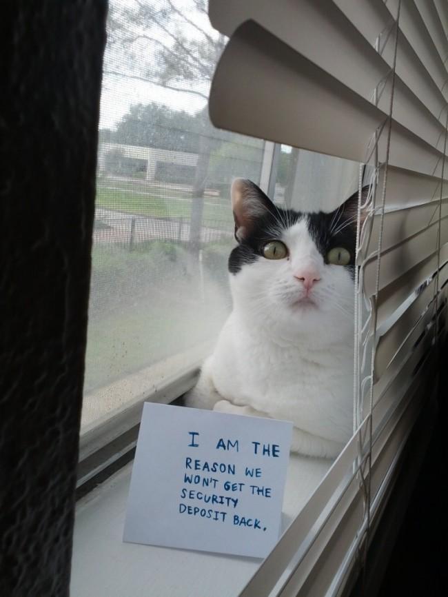 cat shaming 4
