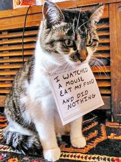 cat shaming 5