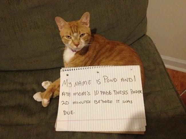 cat shaming 7