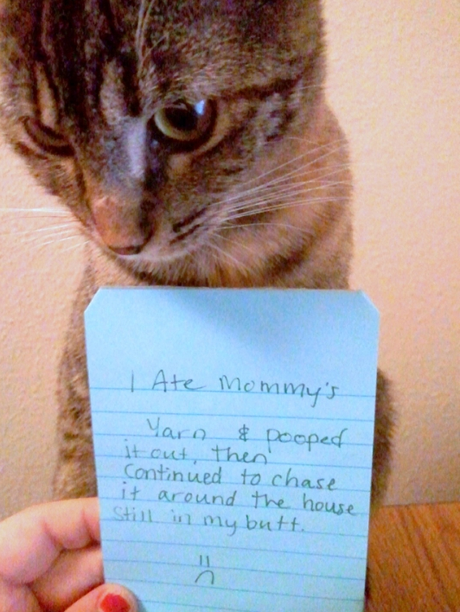 cat shaming 8