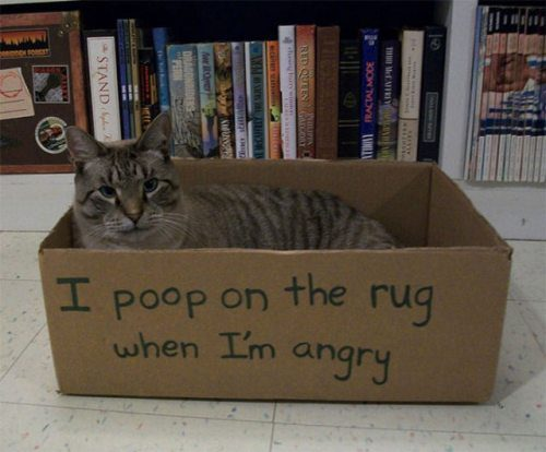 cat shaming 9