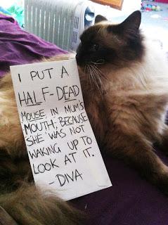 cat shaming 90