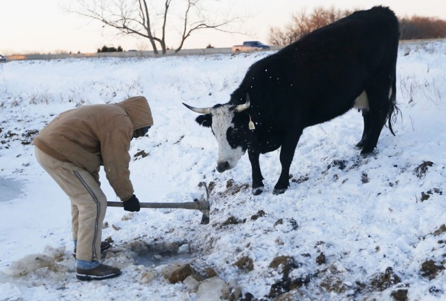 Farmer Randy Cree chops a hole in the ice while a cow waits to drink water from a pond near Big Springs, Kansas, on January 6, 2014. (AP Photo/Orlin Wagner)