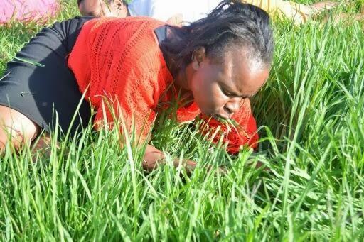 pastor grass