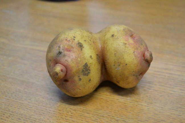 potato breasts