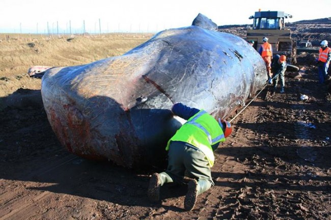 scotland whale 2