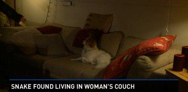 snake in couch
