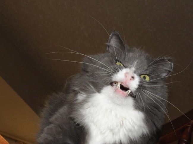 sneezing cats 5